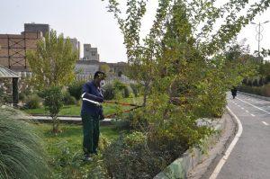 هرس و بازپیرایی فضای سبز بوستان بزرگ نهج البلاغه