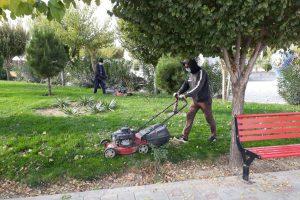 ساماندهی فصلی بوستان های شهر صالحیه | هرس زمستانه درختان برای استقبال از بهاری سرسبز