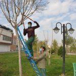 تداوم عملیات هرس فصلی درختان