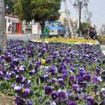 اقدامات بهارانه شهرداری صالحیه در استقبال از نوروزی پر از شور و نشاط
