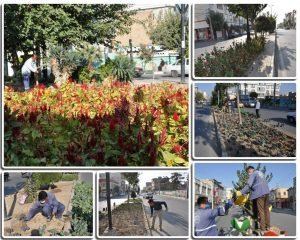 فرش گلهای فصلی در معابر شهر صالحیه
