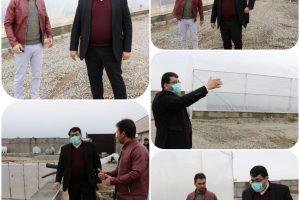بازدید شهردار صالحیه از پروژه نخستین گلخانه چند منظوره شهری موسوم به اقاقیا